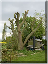 Tree surgery for Stamford, Bourne, Grantham, Market Deeping, Oakham
